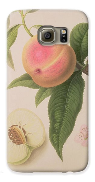 Noblesse Peach Galaxy S6 Case by William Hooker