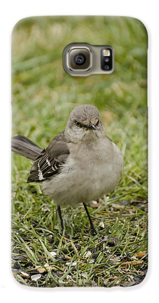 Northern Mockingbird Galaxy S6 Case by Heather Applegate