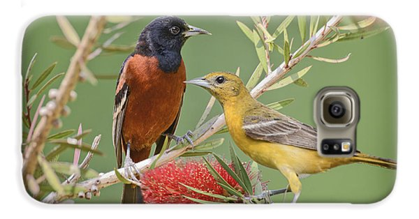 Orchard Oriole Pair Galaxy S6 Case by Bonnie Barry
