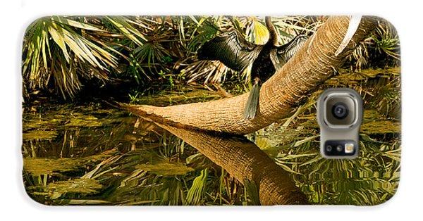 Oriental Darter Anhinga Melanogaster Galaxy S6 Case by Panoramic Images