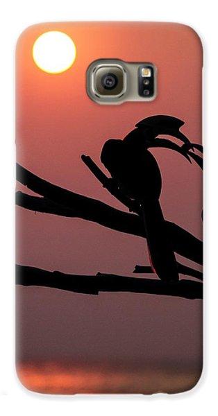 Oriental Pied Hornbills Galaxy S6 Case by Paul Williams
