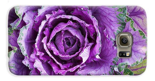 Ornamental Cabbage Galaxy S6 Case by Tim Gainey