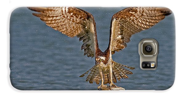 Osprey Morning Catch Galaxy S6 Case by Susan Candelario