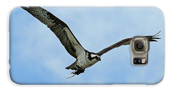 Osprey Nest Building Galaxy S6 Case by Ernie Echols