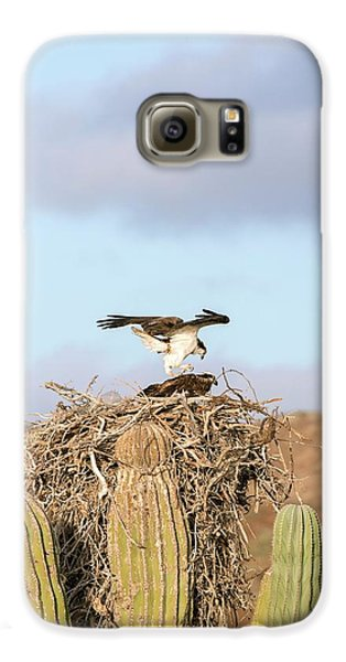 Ospreys Nesting In A Cactus Galaxy S6 Case by Christopher Swann