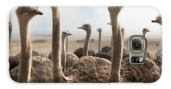 Ostrich Heads Galaxy S6 Case by Johan Swanepoel