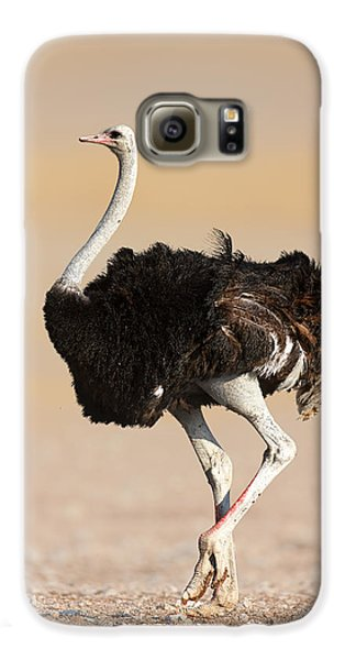 Ostrich Galaxy S6 Case by Johan Swanepoel