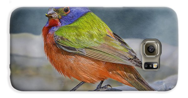 Painted Bunting In April Galaxy S6 Case by Bonnie Barry