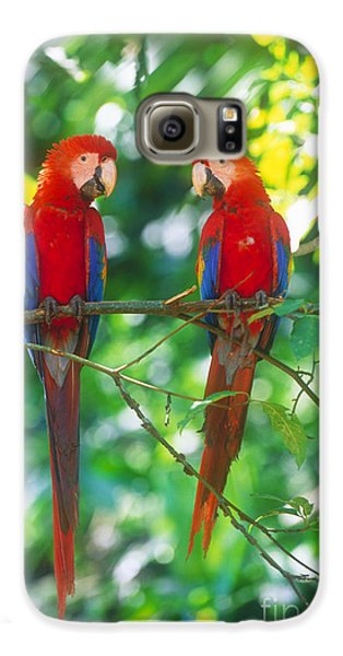 Pair Of Scarlet Macaws Galaxy S6 Case by Art Wolfe