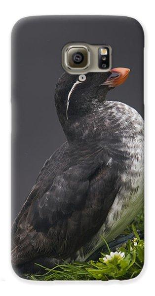 Parakeet Auklet Sitting In Green Galaxy S6 Case by Milo Burcham