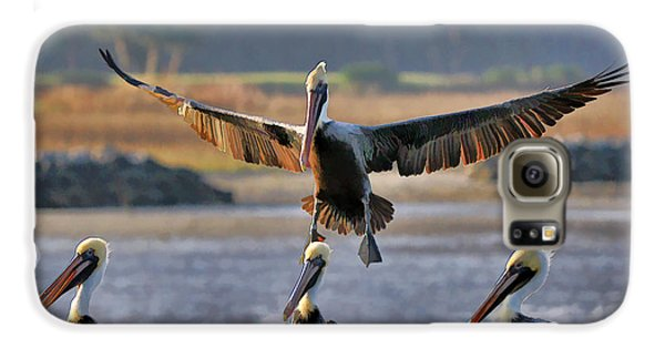 Pelican Coming In For Landing Galaxy Case by Dan Friend
