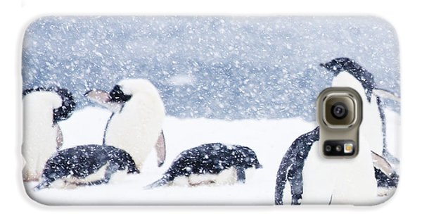 Penguins In The Snow Galaxy S6 Case by Carol Walker