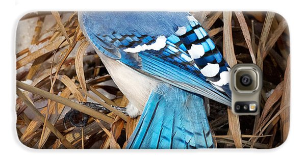 Portrait Of A Blue Jay Square Galaxy S6 Case by Bill Wakeley