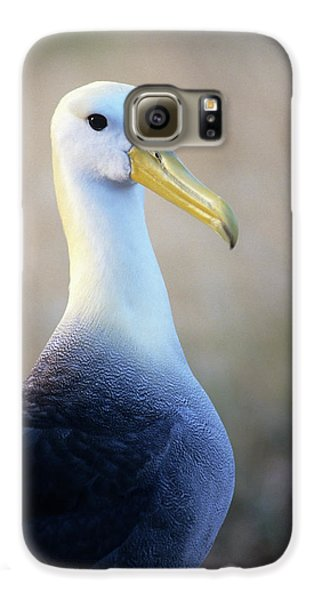 Portrait Of A Waved Albatross Galaxy S6 Case by Thomas Wiewandt