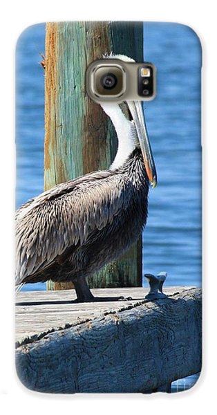 Posing Pelican Galaxy S6 Case by Carol Groenen