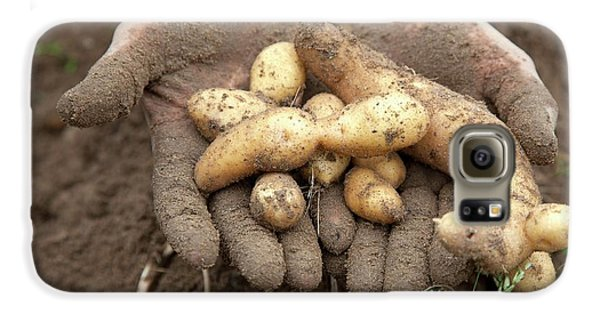 Potato Harvest Galaxy S6 Case by Jim West