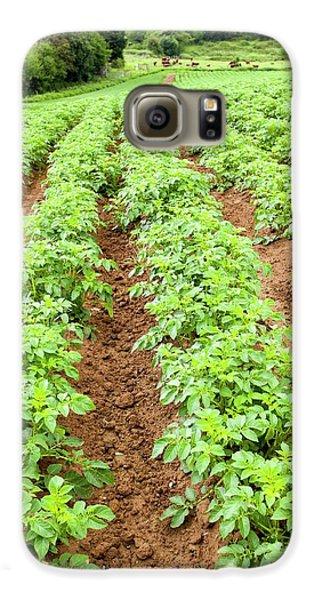 Potatoes Growing At Washingpool Farm Galaxy S6 Case by Ashley Cooper