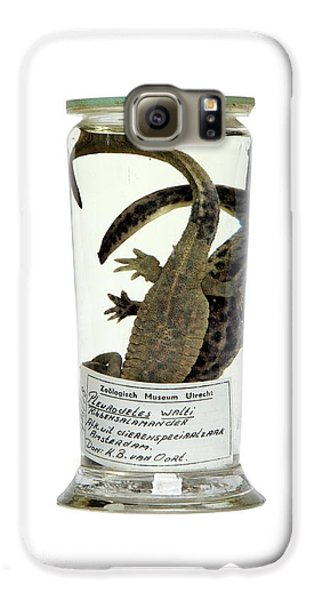 Preserved Newts Galaxy S6 Case by Gregory Davies