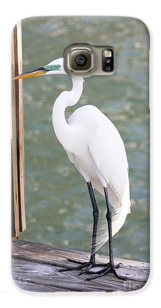 Pretty Great Egret Galaxy S6 Case by Carol Groenen