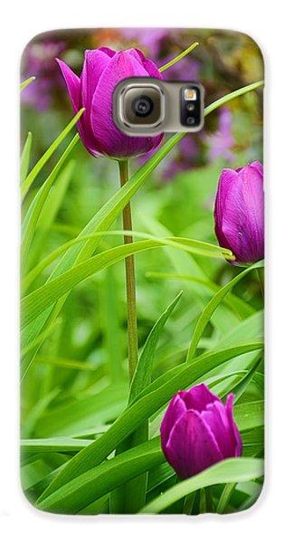Purple Gems- Purple Tulips Rhode Island Tulips Purple Flower Galaxy S6 Case by Lourry Legarde