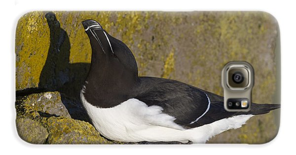 Razorbill Galaxy S6 Case by John Shaw
