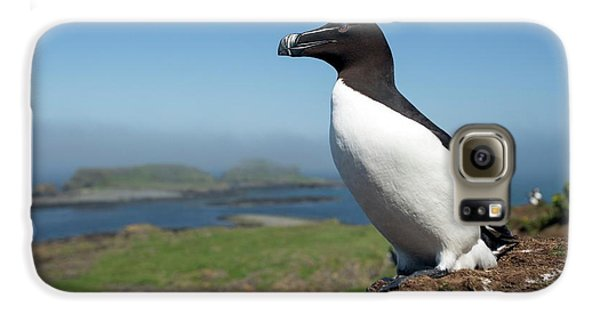 Razorbill On A Coastal Ledge Galaxy S6 Case by Simon Booth