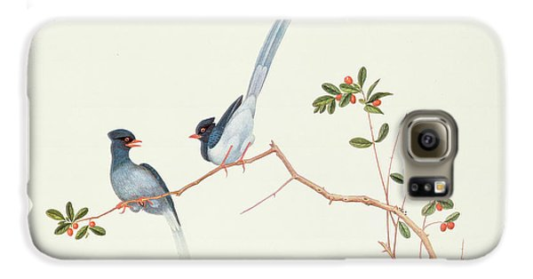 Red Billed Blue Magpies On A Branch With Red Berries Galaxy S6 Case by Chinese School