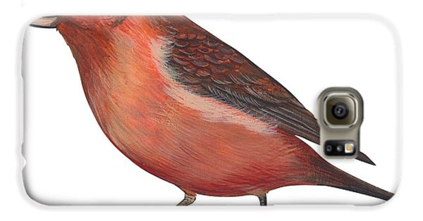 Red Crossbill Galaxy S6 Case by Anonymous