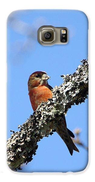 Red Crossbill Finch Galaxy S6 Case by Marilyn Wilson