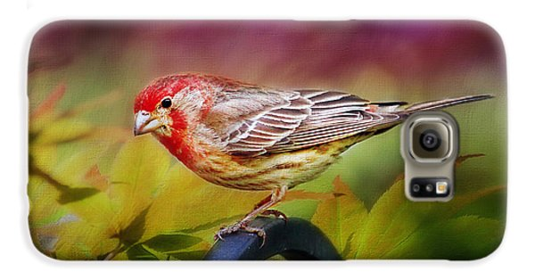 Red Finch Galaxy S6 Case by Darren Fisher