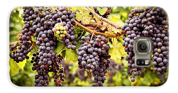 Red Grapes In Vineyard Galaxy S6 Case by Elena Elisseeva