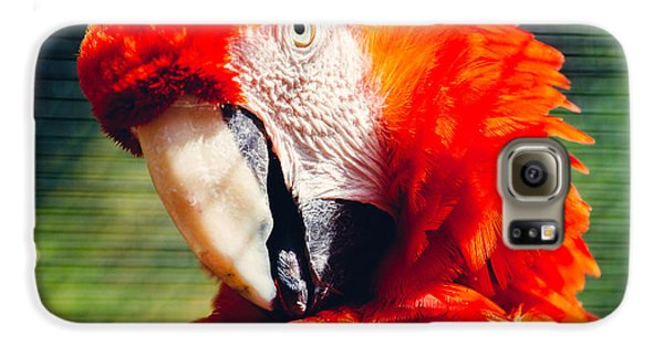 Red Macaw Closeup Galaxy S6 Case by Pati Photography