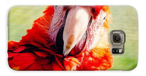 Red Macaw Galaxy S6 Case by Pati Photography