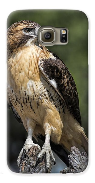 Red Tailed Hawk Galaxy S6 Case by Dale Kincaid