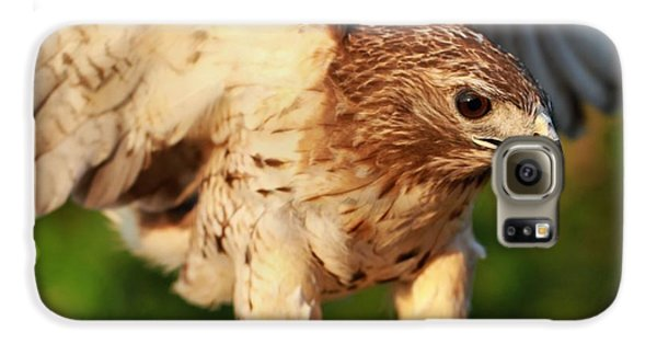 Red Tailed Hawk Hunting Galaxy S6 Case by Dan Sproul