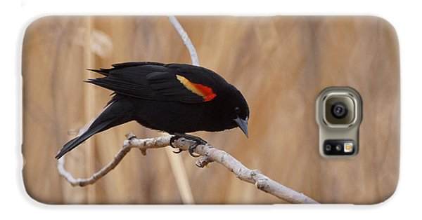 Red Winged Blackbird 1 Galaxy S6 Case by Ernie Echols