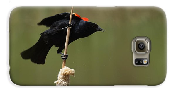 Red Winged Blackbird 3 Galaxy S6 Case by Ernie Echols