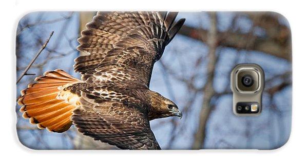Redtail Hawk Galaxy S6 Case by Bill Wakeley