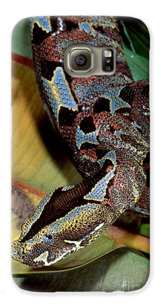 Rhino Viper Galaxy S6 Case by Gregory G. Dimijian, M.D.