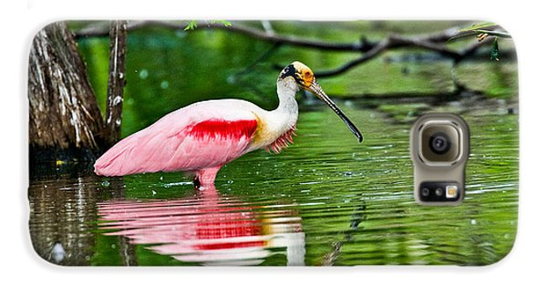Roseate Spoonbill Wading Galaxy S6 Case by Anthony Mercieca