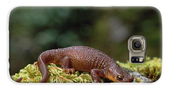 Rough-skinned Newt Oregon Galaxy S6 Case by Gerry Ellis