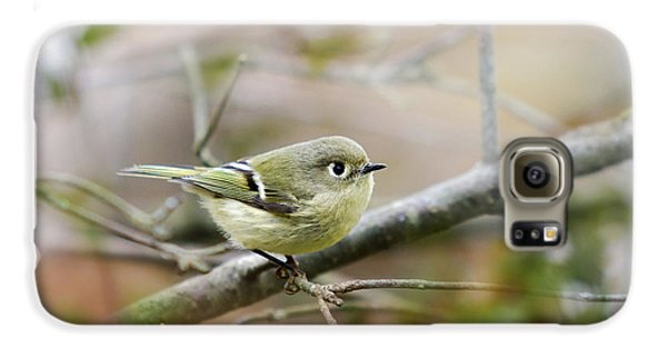 Ruby-crowned Kinglet Galaxy S6 Case by Christina Rollo