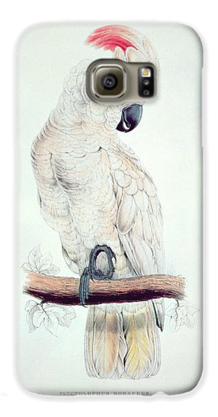 Salmon Crested Cockatoo Galaxy S6 Case by Edward Lear