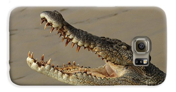 Salt Water Crocodile 1 Galaxy S6 Case by Bob Christopher