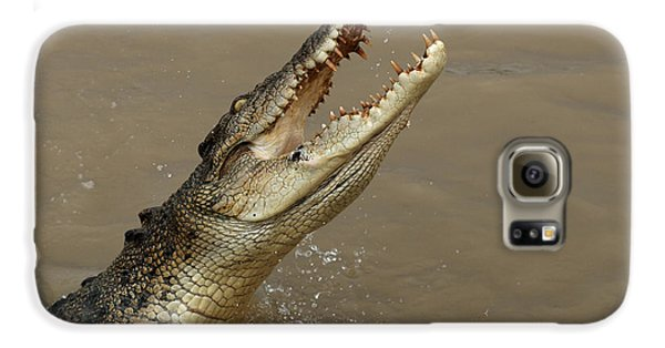Salt Water Crocodile Australia Galaxy S6 Case by Bob Christopher