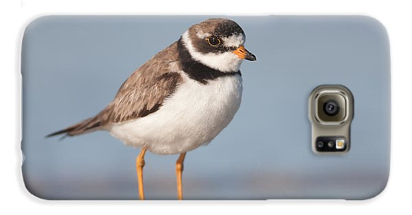 Semipalmated Plover Galaxy S6 Case by Clarence Holmes