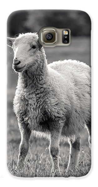 Sheep Art  Galaxy S6 Case by Lucid Mood