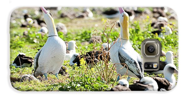 Short-tailed Albatross (phoebastria Galaxy S6 Case by Daisy Gilardini