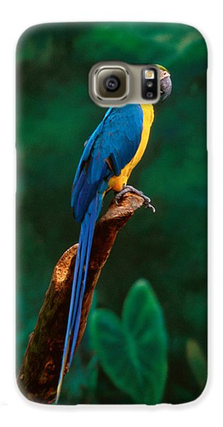 Singapore Macaw At Jurong Bird Park  Galaxy S6 Case by Anonymous