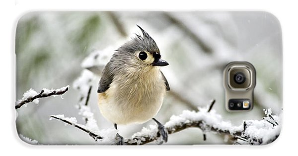 Snowy Tufted Titmouse Galaxy S6 Case by Christina Rollo